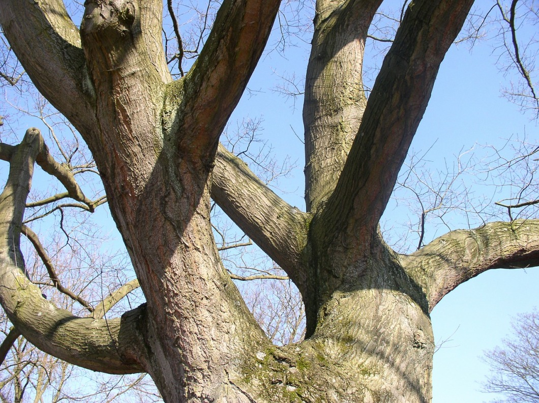 tree-49529_1280